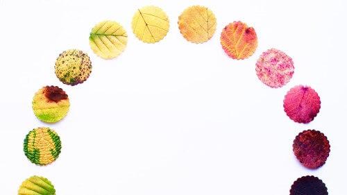 Semi Circle Made of Leaves